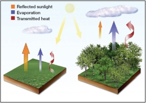 Biophysical effects of landcover