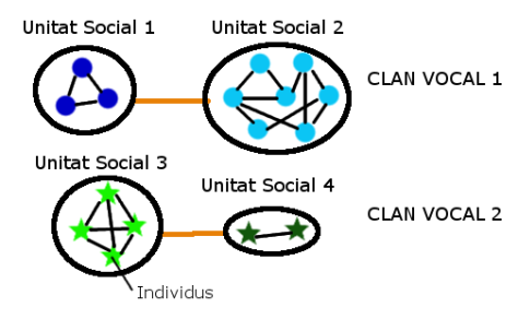 Multilevel societies. Individuals (stars and filled circles) are the lowest level and in association (black lines) with other individuals they constitute social units (empty black circles). Socials units with acoustic similarity (orange lines) form vocal clans (blue and green). It is in vocal clans where dialects can emerge (Picture: Marc Arenas Camps).