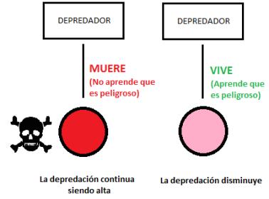 Mimetismo_Mertensiano