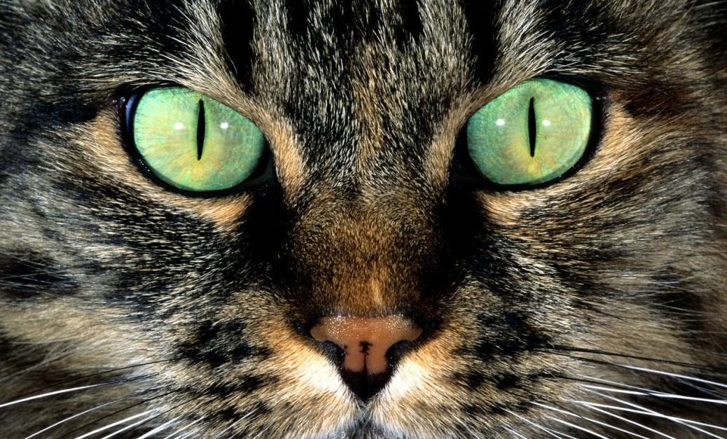 ojos, gato, cat, eyes, ulls, gat, mirada