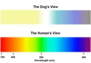 visible spectrum by a dog and a human