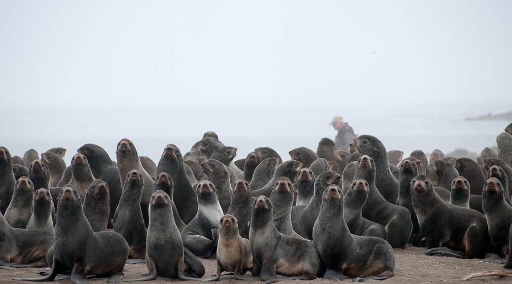 Reproducción en focas y organización social | All you need is Biology