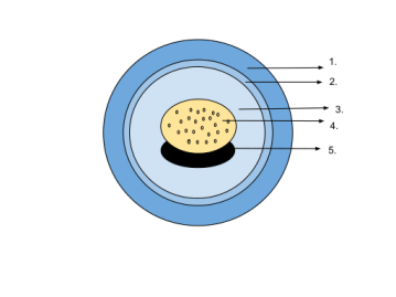 512px-Amphibian_Egg_Diagram.svg