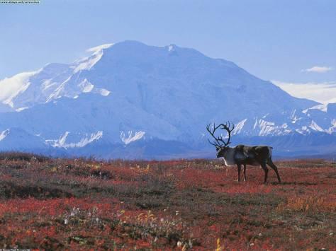 importancia ártico