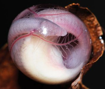 new-species-burrowing-caecilian-egg-closeup_48946_600x450-min
