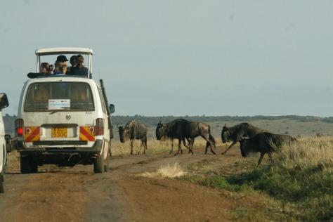 turismo responsable, turismo animales, turismo sostenible, turismo, viaje sostenible, viaje animales, contacto naturaleza, turismo responsable animales, safari kenia, kenia, viaje kenia,